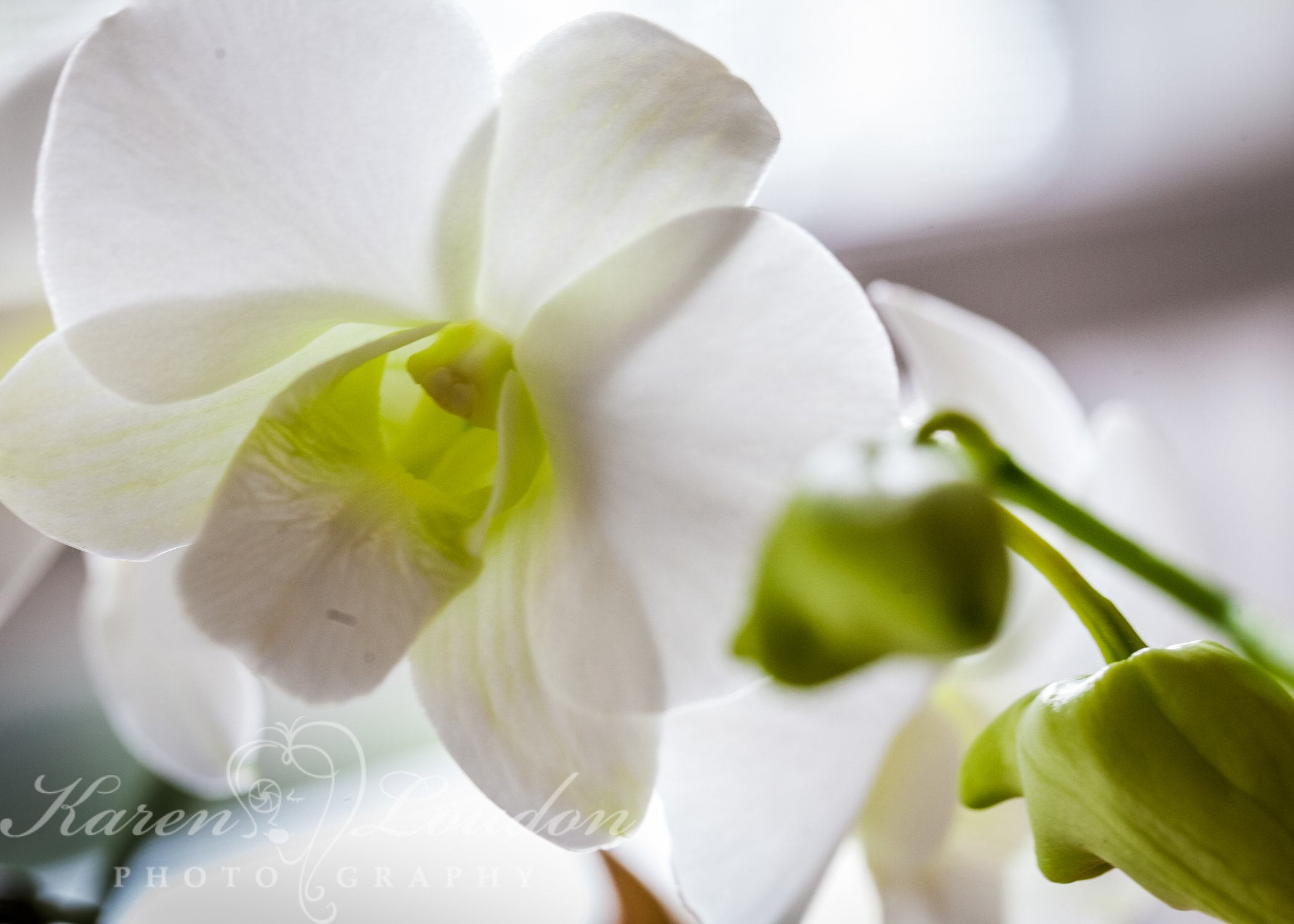 Holualoa flowers