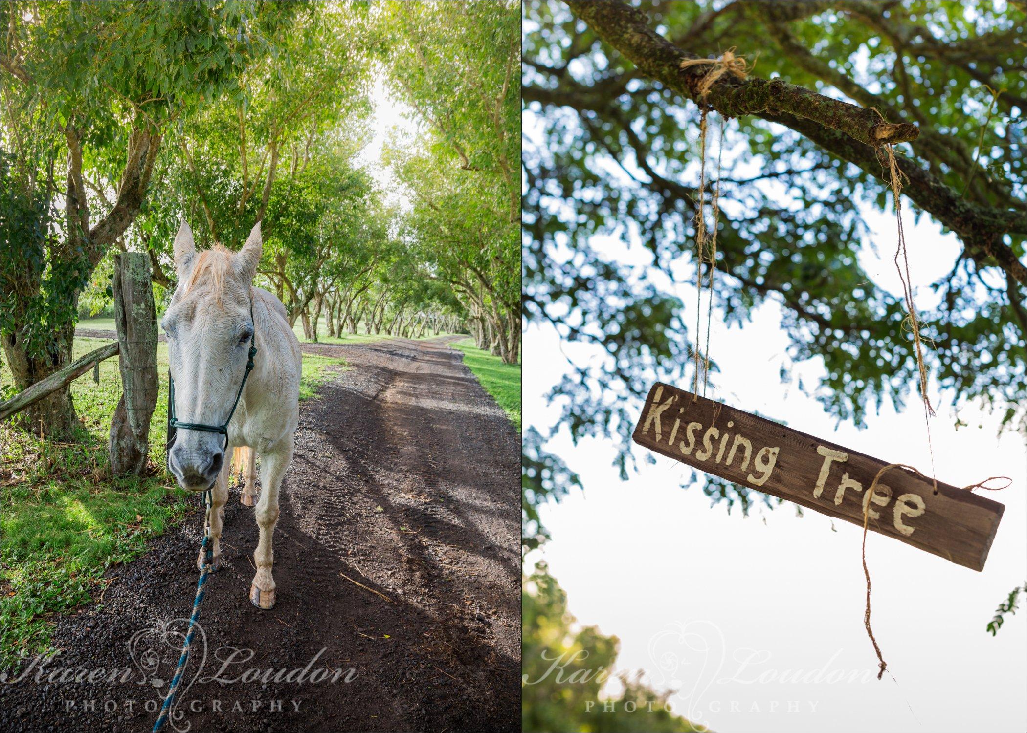 Horse wedding Hawaii